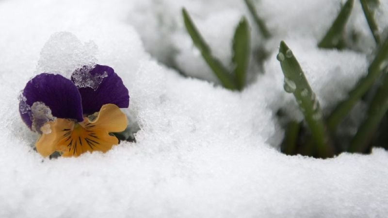 Au sud des Alpes, mars a été l'un des plus frais depuis 30 ans.